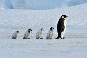followership-leadership-recruitment-teammanagment