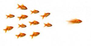 followership-leadership-recruitment